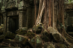 Back to the roots (preze) Tags: angkor siemreapprovince kambodscha cambodia südostasien baum bäume tree templeruin tempelruine laterit sandstein ruinen wurzeln roots tombraidertemple taprohm
