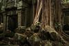 Back to the roots (preze) Tags: angkor siemreapprovince kambodscha cambodia südostasien baum bäume tree templeruin tempelruine laterit sandstein ruinen wurzeln roots tombraidertemple taprohm