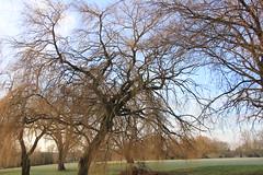 IMG_3640 (Jeff And) Tags: kenton greenhill harrow park tree