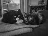 Bonded (Katrina Wright) Tags: img1117 cats mel ella snuggle felines monochrome bw