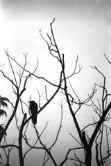 veins (BleakView) Tags: bird raven bleak bleakview blackandwhite bw veins heroin death fog crow lost lonely dying grit grain