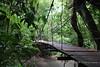 Bridge in the forest (Roberto Lauro) Tags: costarica viaggi travel bridge foresta forest ponte natura nature rioceleste vulcanotenorio green trees blurb blurbbooks blurbbook fotolibro photobook librofotografico canon puravida