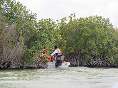 day ten in sian ka'an (dolanh) Tags: mexico siankaancommunitytours boattrip siankaan bioreserve yucatan