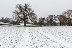 Balcombe, Sussex (E_W_Photo) Tags: balcombe sussex snow field tree canon 80d sigma 1750mm