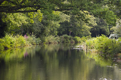 Reflecting on summer (Anxious Silence) Tags: england countryside surrey knaphill outdoors summer walking countrypark uk water canal landscape