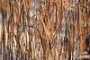 rhythm (vertblu) Tags: giantchinesegrass grasses grass grassblades wintergrasses winter wintery wintry sunlight sunlit sunrays wintersun faded fadedleaves fadedgrasses lowsun lightshadow light snow snowy vertblu nature lines linien