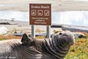 Drakes Beach Welcome (Ronda Hamm) Tags: nationalpark pointreyesnationalseashore animal mammal seal elephantseal wildlife sealife sign animalwithsign canon 7dii california