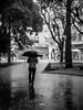 Umbrella (GMPdS) Tags: umbrella guarda chuva rain black white bw preto e branco pb sony dscw610 w610 gabriel moreno gabrielmorenopds gmpds curitiba parana brasil brazil wet molhado chao piso praça tiradentes square trees arvores