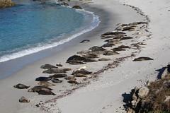 IMG_7672 (mudsharkalex) Tags: california pacificgrove pacificgroveca