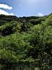 On the trail to the top of Diamond Hill - Waikiki 2017 3a (litlesam1) Tags: hawaii oahu neverendingbirthay2017 november2017 waikiki diamondhead