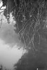 strada comun 16 (formicacreativa) Tags: stradacomun percorsociclopedonale ferrazze verona vegetazione piante gelo brina corsodacqua sorgenti macro pianta animale sentiero legno albero foschia strada cielo sentierobattuto erba foresta parco