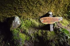 Agua de la Belleza (Tato Avila) Tags: colombia colores cálido naturaleza nikon piedras roca vida vegetal texturas choachí cundinamarca