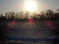 Winter fields (stevenbrandist) Tags: winter ice snow cold leicestershire trees sun sunshine