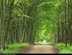 20170628_03 Misty forest road & red sign (really just a zoomed-out version of today's main pic... Might delete this one) | Białowieża Forest, Poland (ratexla) Tags: ratexlasinterrailtrip2017 28jun2017 2017 canonpowershotsx50hs interrail interrailing eurail eurailing tågluff tågluffa tågluffning travel travelling traveling journey epic europe earth tellus photophotospicturepicturesimageimagesfotofotonbildbilder wanderlust vacation holiday semester trip backpacking tågresatågresor resaresor europaeuropean sommar summer ontheroad beautiful poland polska białowieżaforest bialowiezaforest białowieża bialowieza nature green landscape scenery scenic hiking hike forest skog lövskog deciduousforest