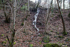 Cascada boscosa (CC17SO) Tags: agua bosque árbol tree navarra naturaleza nature urederra