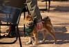 Dog Days '18, Morton Arboretum. 6 (EOS) (Mega-Magpie) Tags: canon eos 60d outdoors the morton arboretum lisle dupage il illinois usa america pet cute dog puppy people person