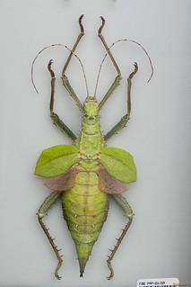 Insecte, Québec, Canada - 5064