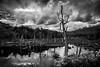 Tierra del Fuego, Argentina (pas le matin) Tags: tree arbre wood bois forest forêt sky ciel lake clouds lac travel landscape paysage voyage water eau reflection nuages argentina argentine terredefeu tierradelfuego patagonia patagonie southamerica ushuaia canon 5d 5dmkiii canon5dmkiii canoneos5dmkiii eos5dmkiii bw nb blackandwhite noiretblanc monochrome