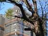 EPL22581 (M.Y.Jerry Kuo) Tags: schneiderkreuznach retinaxenon 50mm f19