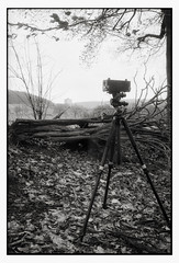 Panorama (making-of) (Andre Kurenbach) Tags: realitysosubtle panorama panoramic film rollfilm 6x17 curved filmplane analogue analog canon new f1 fd35mmf2 calm scene lonely nature forest ilford hp5 caffenol