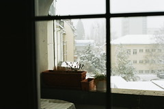 (Kathleen Vtr) Tags: window winter snowflakes cold home fribourg switzerland wonderland seasonal moody 35mm grain analog film canonae1