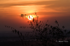 Sit and watch as the Sun sets fire to the sky! (abhishek.verma55) Tags: sunset sunsets sun clouds landscape nature sky tree fireball sunny evening dusk incredibleindia canon550d india indiatravel wanderlust ©abhishekverma naturephotography photography travelphoto travelphotos sunsetlover cloud cloudy cloudscape beautiful travel travelphotography orange color colour colorful colourful view scene scenery scenic fog foggy dof leaves vivid vibrant golden fire skylover beautifulnature beautifulsky goldenhue dooars duars westbengal
