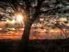 A una rama del equinocio. A branch before the equinox (MAURINO SAM) Tags: paisaje poniente sol puesta sunset landscape arroyomolinos combos comunidaddemadrid guadarrama canong7x