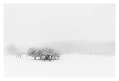 Gathering (bprice0715) Tags: canon canoneos5dmarkiii canon5dmarkiii landscape landscapephotography nature naturephotography beautiful beauty beautyinnature blackandwhite blackwhite bw monochrome mono winter snow snowylandscape snowing blizzard white trees cold frigid fineart highkey
