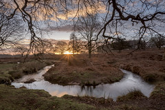 River Lin Bradgate Park (John__Hull) Tags: river lin bradgate park leicestershire uk england charnwood bend winter ferns bracken sunrise nikon d7200 sigma 1020mm countryside trees twigs branches