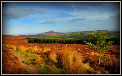 """ Going Home "" ("" P@tH Im@ges "") Tags: blanketbog bracken norwayspruce bigsugarloaf home countywicklow ireland whitehill november east mountkennedyhill"
