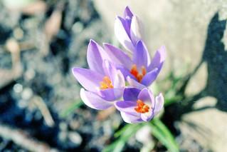 Früüühling!