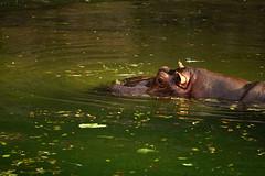 DSC07714.jpg (joe.spandrusyszyn) Tags: byjoespandrusyszyn orlando animalkingdom disneyworld unitedstatesofamerica florida