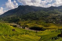 Údolí Muong Hua plné rýžových teras (zcesty) Tags: vietnam26 terasa rýže pole krajina hory vietnam dosvěta làocai vn
