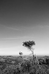 A Broken Branch (Kit Sidlow) Tags: tree ibiza landscape day clear hilltop black white blackandwhitephotography isolated barren spain