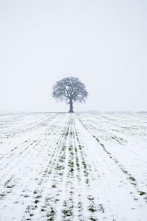 A windswept winter