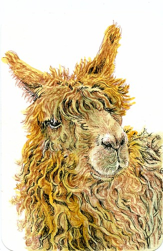Suri Alpaca-Postcards for the Lunch Bag