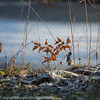 winter images (Borglin.M) Tags: damm lindängelund malmö skåne sweden frusen gräs is kallt katrinetorp natur solsken vinter växter