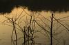 Sénart 001 (HAKUDO Photography) Tags: forest sénart french france essonne light shadow pentax 55mm