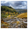 Follow the river down (John Joslin) Tags: loxia2821 lake landscape loxia lakedistrict thirlmere rocks stones river stream england cumbria clouds overcast forest hills sky uk mountains nature north outdoors outside sony autumn grass wall trees fir