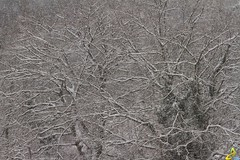 2018_007 (kgorka) Tags: gorkabarreras canon eos7d canon100400mmf4556lisusmef 100400isusm nieve snow tormenta storm febrero frio invierno winter paisaje arbol tree landscape muskiz bizkaia