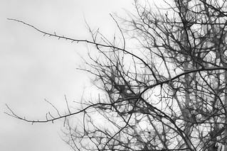 Black and white dreary day