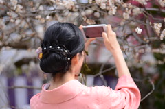 plum blossoms in full bloom #2 (snowshoe hare*) Tags: dsc0814 plumblossoms japaneseapricot kyoto 北野天満宮 梅 京都 kimono lady flower flowers mobilephone cellphone kitanotenmangushrine