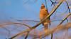 Her Majesty (Ken Krach Photography) Tags: cardinal