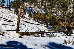 Custer Park 20180223-0023 (Photos By Bob Van) Tags: blackhills csp custerstatepark landscape snow southdakota winter custer unitedstates us