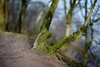 ever green (Amselchen) Tags: moss bokeh blur dof depthoffield sony a7rii alpha7rm2 samyang 85mmf14 sonyilce7rm2
