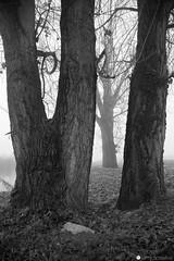 strada comun 17 (formicacreativa) Tags: stradacomun percorsociclopedonale ferrazze verona vegetazione piante gelo brina corso dacqua sorgenti macro pianta animale sentiero legno albero foschia strada cielo sentierobattuto erba foresta parco