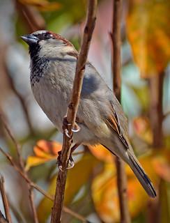 SMALL PORT ST JOE BIRD REFRAMED