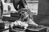IMG_0303.jpg (anakin6905) Tags: cemetery cimitero artesacra sacro arte monumenti torino monumentale riposo eternità