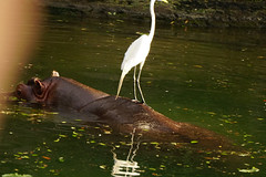 DSC07713.jpg (joe.spandrusyszyn) Tags: byjoespandrusyszyn orlando animalkingdom disneyworld unitedstatesofamerica florida