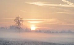The Beginning (Captain Nikon) Tags: misty moody atmospheric sunrise daybreak morning winter lonetree silhouettes leicestershire rural england landscapephotography outdoorphotography landscapes nikon